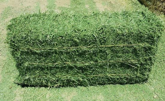 Picture of Alfalfa 3-string Square Bale (Arizona)