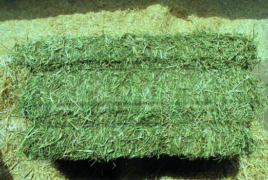 Picture of Alfalfa 2-string Square Bale (New Mexico)