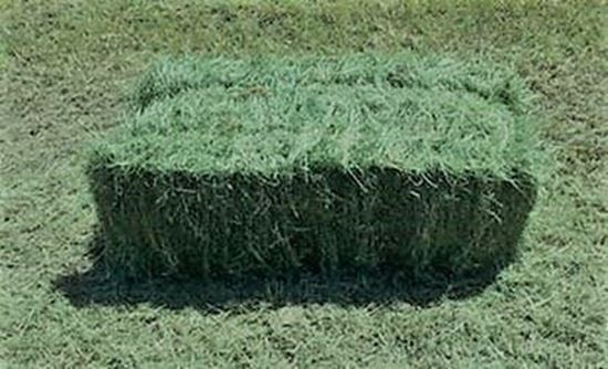 Picture of Coastal Bermuda 2-string Bale (#1)